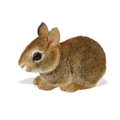Incredible Creature - Eastern Cottontail Rabbit