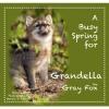 A Busy Spring for Grandella the Gray Fox