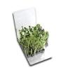 Amazing Lid Poppin' Planting Kit